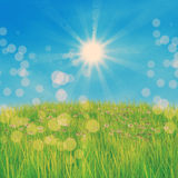Green grass and daisies. Summer nature background with 3d green grass and white daisies Royalty Free Stock Photos