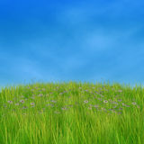 Green grass and daisies. Summer nature background with 3d green grass and white daisies Stock Images