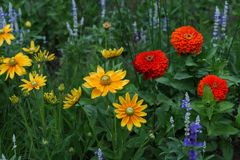 Different beautiful colorful flowers Stock Image