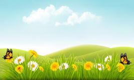 Summer nature background with grass and flowers and butterflies. Vector Royalty Free Stock Images