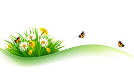 Summer nature background with grass, flowers and butterflies. Vector Stock Images