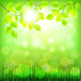 Summer nature background with green foliage vector Royalty Free Stock Photos