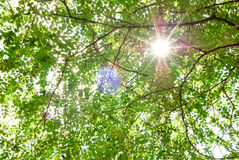 Summer nature background with leaves and sun. Nature bright background with black branches, green leaves and sun light in a sunny summer day stock images