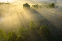 Summer nature background. Scenery misty morning in sunshine aerial view. Bright sun rays through trees in fog on grassy meadow. royalty free stock photo