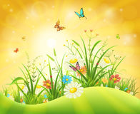 Summer nature background Royalty Free Stock Photos
