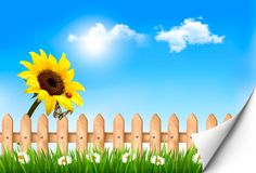 Summer nature background with sunflower Royalty Free Stock Image