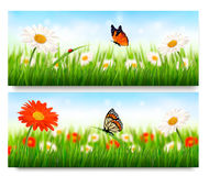 Summer nature banners with colorful flowers. And butterfly. Vector Royalty Free Stock Image