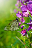 Summer nature, butterfly on flower Stock Photos