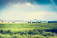 Summer nature landscape background with green field and beautiful sky Stock Photos