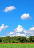 Summer Nature Landscape Stock Photography