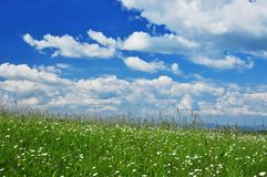 Summer nature meadow background Stock Photos