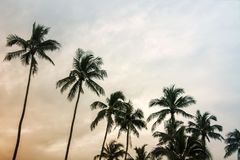 Summer nature scene, coconut tree at tropical coast. Made with Vintage Tone Stock Photo