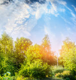 Summer nature scenery with green bushes and trees over beautiful sky Royalty Free Stock Photography