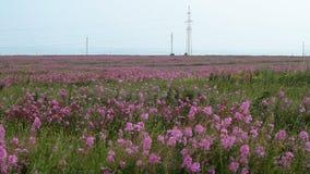 Summer Nature Scenery stock video