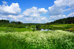 Summer nature, scenery with wildflowers Stock Image
