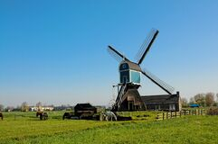 Summer in the netherlands, windmill and  livestock pastures