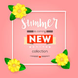 Summer new collection banner. Vintage style text poster with graphic elements and daisies. Yellow flower with green leaf Royalty Free Stock Photos