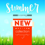Summer new collection bright advertising banner, text poster. Green, natural grass, white daisies, camomile flower and. Small red lady-bug. Blue sky, white Stock Photo