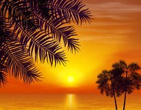 Summer night. Palm trees on the background of. Sunset. Vector illustration. EPS 10 Stock Photography