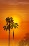 Summer night. Palm trees on the background of. Sunset. Vector illustration. EPS 10 Stock Photo
