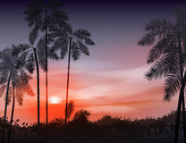 Summer night. Palm trees on the background of. Sunset. Vector illustration. EPS 10 Stock Photos