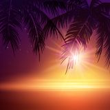 Summer Night. Palm trees  in the night. Vector Royalty Free Stock Photography