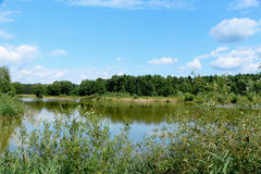 Summer  noon. Summer landscape in the nature of the lake Royalty Free Stock Images