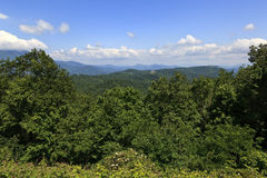 Summer in the North Carolina Mountains. Green leaves and summertime in the mountains stock photos