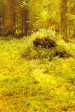 Summer Northern Forest Glade with a Stump Royalty Free Stock Images