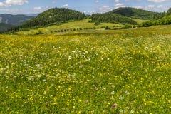 Summer in northern Slovakia. Summer meadow in northern Slovakia royalty free stock photos