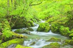 Summer of Oirase Stream Stock Photography
