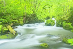 Summer of Oirase Stream Stock Image