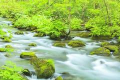 Summer of Oirase Stream Stock Photo