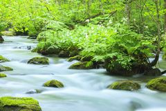 Summer of Oirase Stream Royalty Free Stock Image