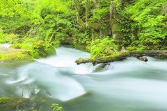 Summer of Oirase Stream Royalty Free Stock Photo