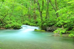 Summer of Oirase Stream Royalty Free Stock Photography