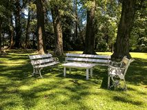 White benches and table stand in the park on the background of large trees stock photography