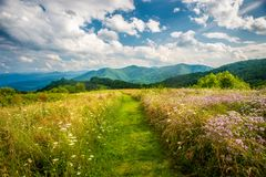 Summer Open Field Scenic Light Great Smoky Mountains NC NC. Open Field Scene Purchase Knob Great Smoky Mountains National Park Waynesville NC stock image
