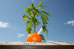 Summer Orange Stock Image