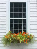 Summer: orange flower window box. Orange and yellow nasturtium flowers in window box against white weatherboard house, Hardwick, Massachusetts Royalty Free Stock Images