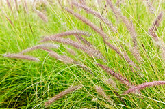 Summer outdoor grass Stock Photos
