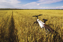 Summer outdoor photo e-bike in gold wheat field Stock Photos