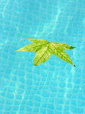 Summer is over. A autumn leaf floats in a swimming pool Stock Images