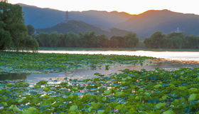 Summer Palace Sunset Royalty Free Stock Image