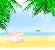 Summer palm beach Stock Photos