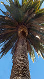 Summer palm tree Stock Photography