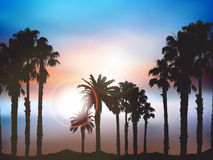 Summer palm tree landscape Royalty Free Stock Photo