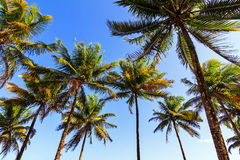 Summer palms Stock Images