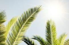 Summer Palms Royalty Free Stock Photos