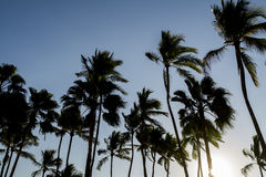 Summer palms. Palms in Puerto Vallarta Mexico Royalty Free Stock Photography
